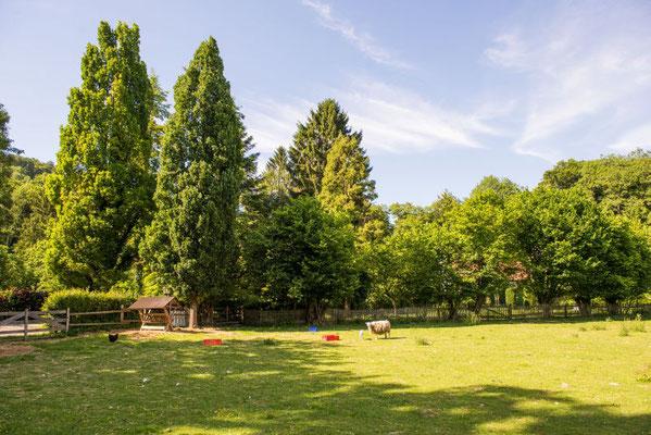 Blick auf dne Garten von der Wiese aus #AltesForstamtimteutoburgerwald#