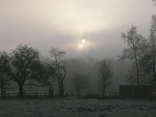 Mystische Stimmung im Winter #AltesForstamtimteutoburgerwald#