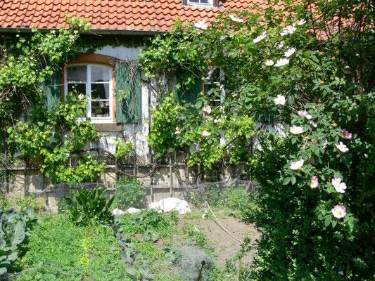 Frühling im Garten #AltesForstamtimteutoburgerwald#