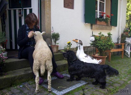 Die Tiere geniessen die Streicheleinheiten