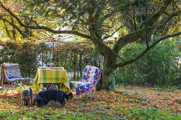 Hunde unter derm Alten Ahorn - Garten Altes Forstamt im Teutoburger Wald