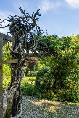 Alte Hortensie am Rankgerüst #AltesForstamtimteutoburgerwald#