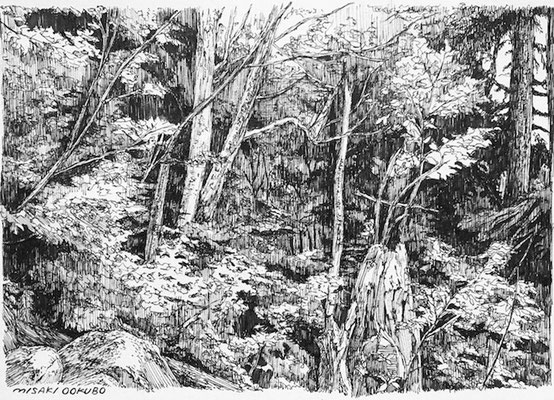 北アルプス 湿り気のある森