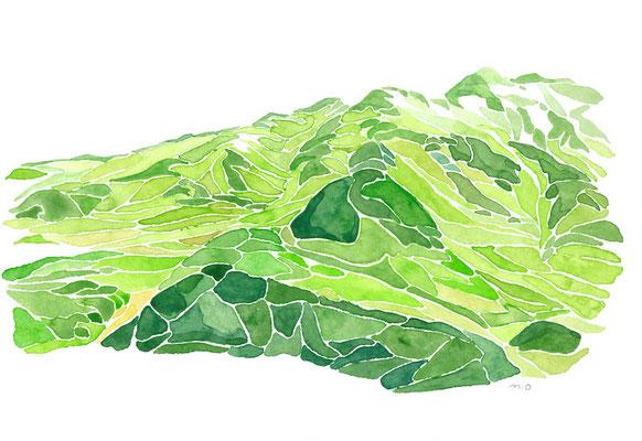 「Summer of Mt.Tateyama. 」  Watercolor. 2016