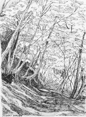 西丹沢 檜洞丸