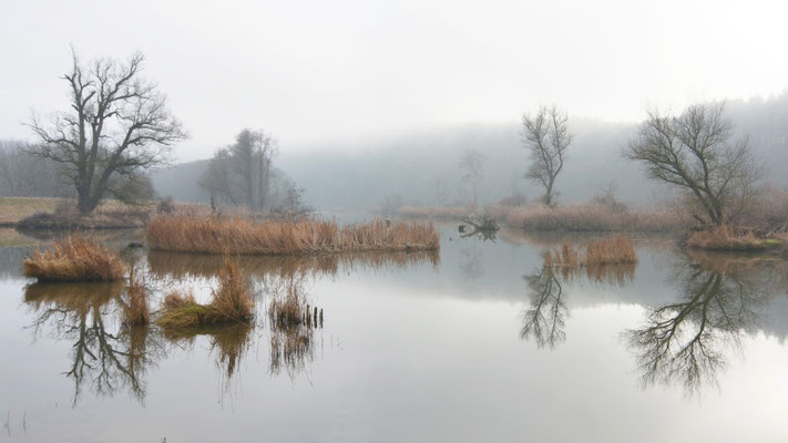 Foto: R. Wittmann -Donau-Auen