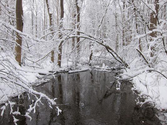 Foto: R. Wittmann -Donau-Auen im Winter