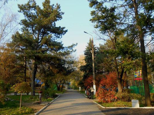 осень в приморском парке