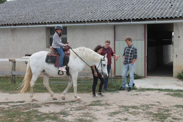 voltige a cheval