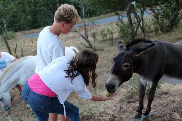 faire amis avec nos animaux