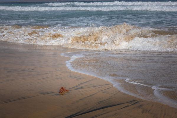 Küstenwanderung