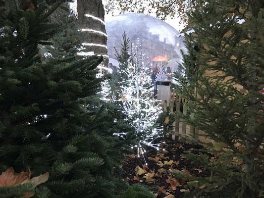 Appart'Louis XII, Meublé de tourisme, Blois, Lyres d'hiver