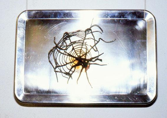 im Netz, ca. 30 x 20 cm - 1993