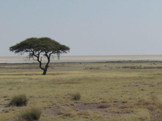typisch Afrika