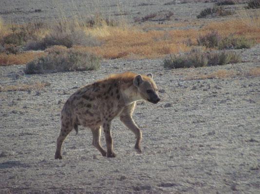 Hyäne