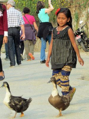 bring die Enten heim