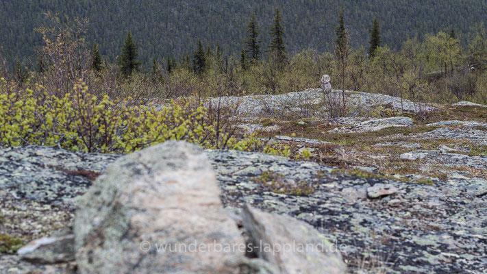 Steine markieren die Abstiegsstelle