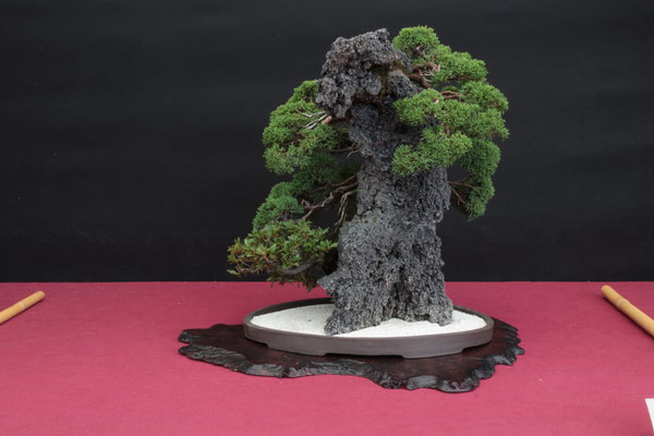 Ishizuki - Pasquè Bonsai Club