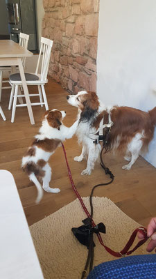 Arthur und Bruni im Restaurant
