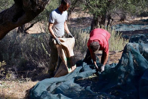 Wir benutzen mobile Netze, die unter dem jeweils abzuerntenden Baum ausgelegt werden und dann mit uns weiterziehen.