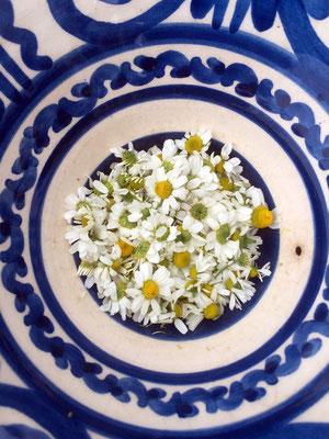 Und wir haben den Frühling eingefangen - Kamillenblüten aus Ancient Antissa, direkt am Meer gesammelt...