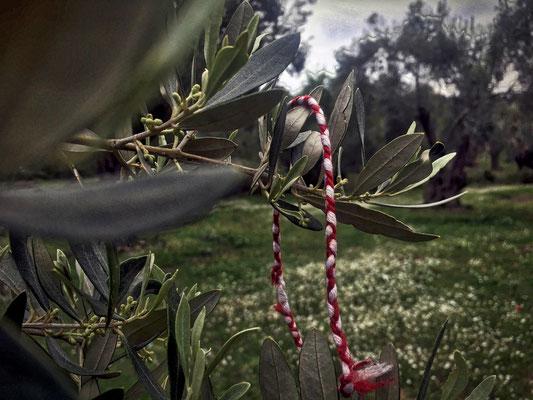 Märzband hängt im Baum