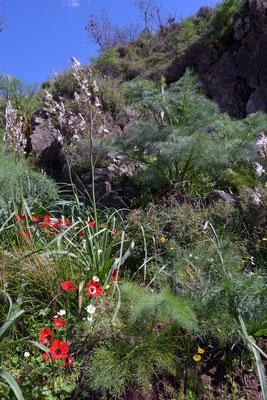 Die Insel erwacht ... alle Pflanzen wetteifern um die schönsten Blüten.