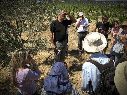 Dimitris vom griechischen Bio-Verband DIO erklärt und zeigt traditionelle Beschnittttechniken