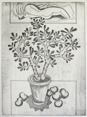 Topfpflanze  1980  29,5 x 39,5              ( 4 )