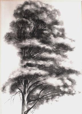 Studie eines Baumes  1947    39,5 x 54