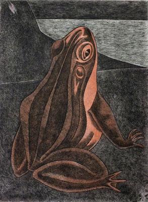 Frosch  1979    29,5 x 39