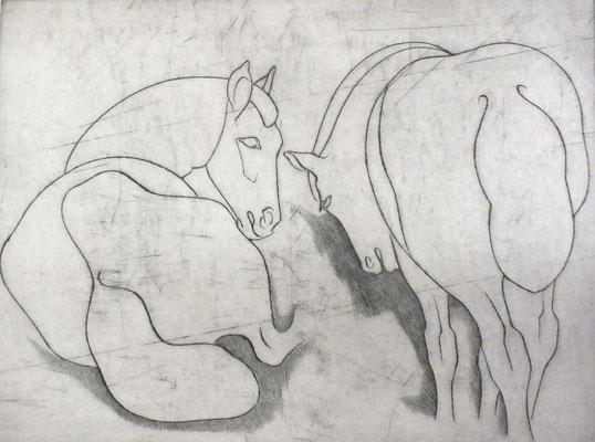 Pferde  1981  39,5 x 30