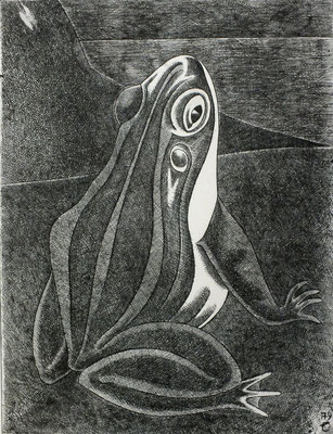 Frosch  1979  29,5 x 39 ( Ätz )