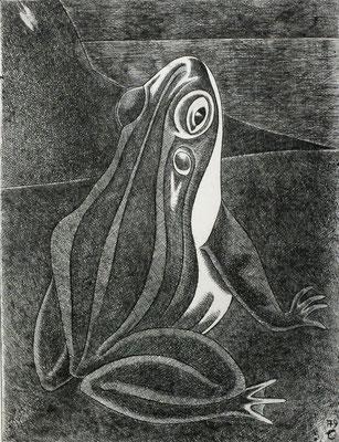 Frosch  1979  29,5 x 39 ( Ätz )          ( 1 )