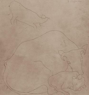 Tier Studie 1948  25 x 27 ( Sepia Tinte )