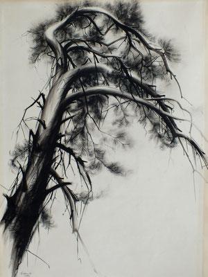 Studie eines Baumes  1948  35,5 x 48,5  (Kahle Sammlung)
