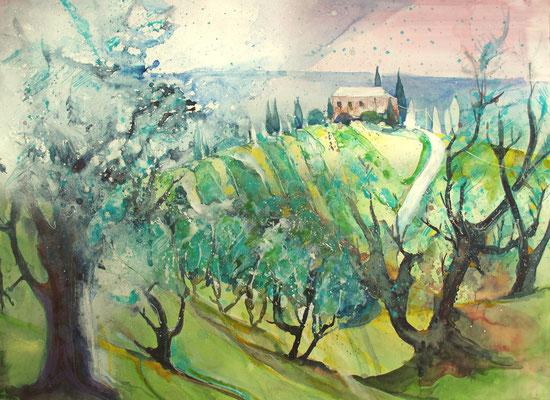 Toskana_Olivenbäume bei Vinci, nachmittags_56x76 cm