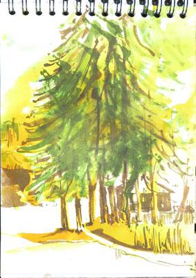 Baumgruppe beim Schloß Drosedow