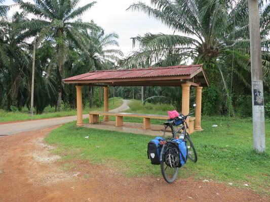 Rastplatz im Palmenwald