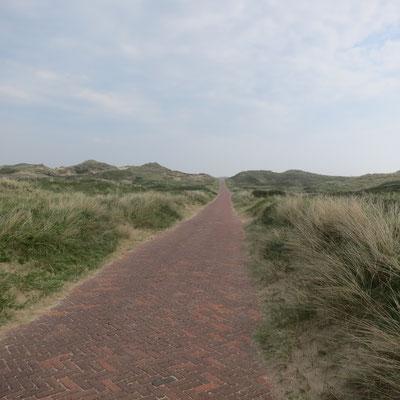 Nordseedünen bei Zandvoort