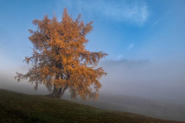 Herbstnebel auf der Seiser Alm
