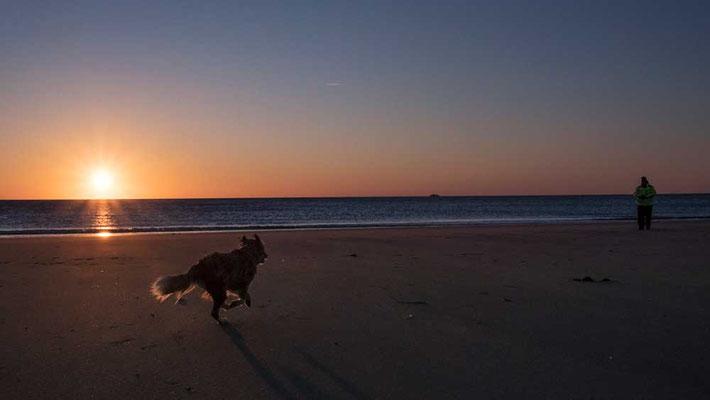 Ein Herz auf vier Pfoten am Strand von Rantum, Sylt
