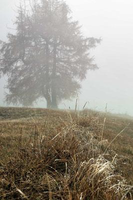 Glitzernd gefrorene Tautropfen im Herbstnebel | Seiser Alm