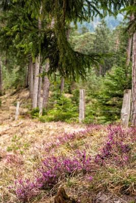 Durch den Naturpark zu den Kuhfluchtwasserfällen, Farchant, Zugspitzregion