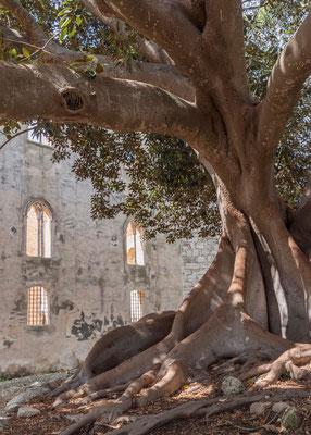 Der Park des Castello di Donnafugata mit Jahrhunderte alten Bäumen, Provinz Ragusa, Sizilien
