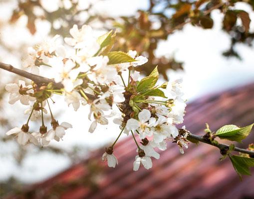 Frühlingsimpressionen auf dem Weg zur Margarethenschlucht, Neckargerach