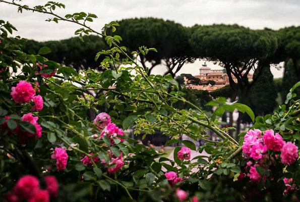 Der Rosengarten Roms ist eine duftende, blühende Oase mit Blick auf die Stadt - im Hintergrund die Quadriga auf dem Monumento Vittorio Emmanuele II