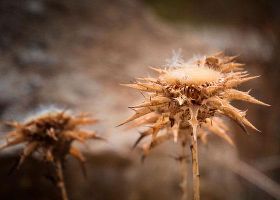 In der Hitze ausgetrocknete Gräser