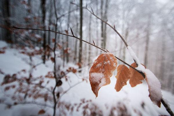 Taunus Winter Wunderland, Schmitten, Hessen