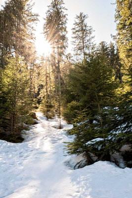 Noch ist´s Winter am südlichen Ufer des Eibsees, Eibsee-Rundweg, Grainau, Zugspitzregion